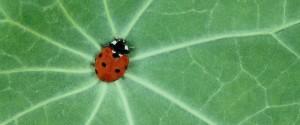 Ein Käfer sucht den Weg
